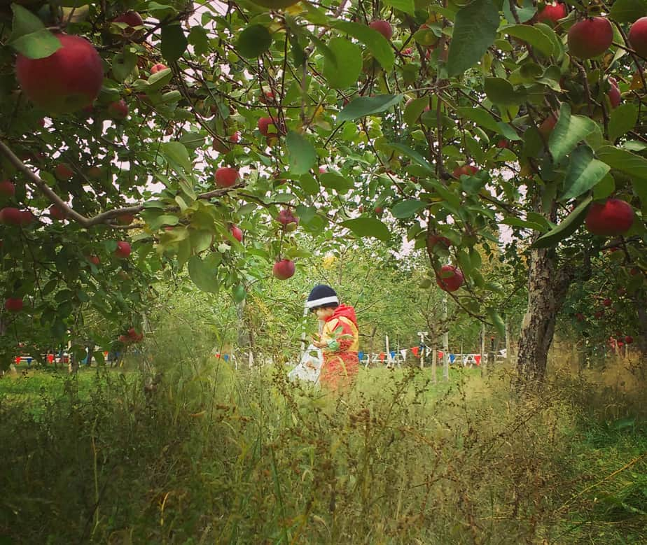 Apple picking is a one of our favorite fall outdoor activities